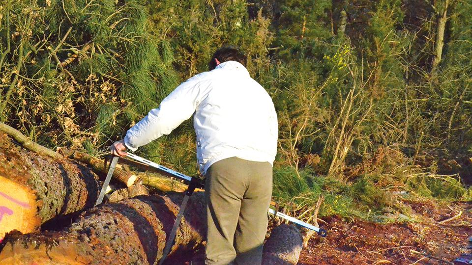 Expert forestier agréé égale aide aux missions de maîtrise d'œuvre