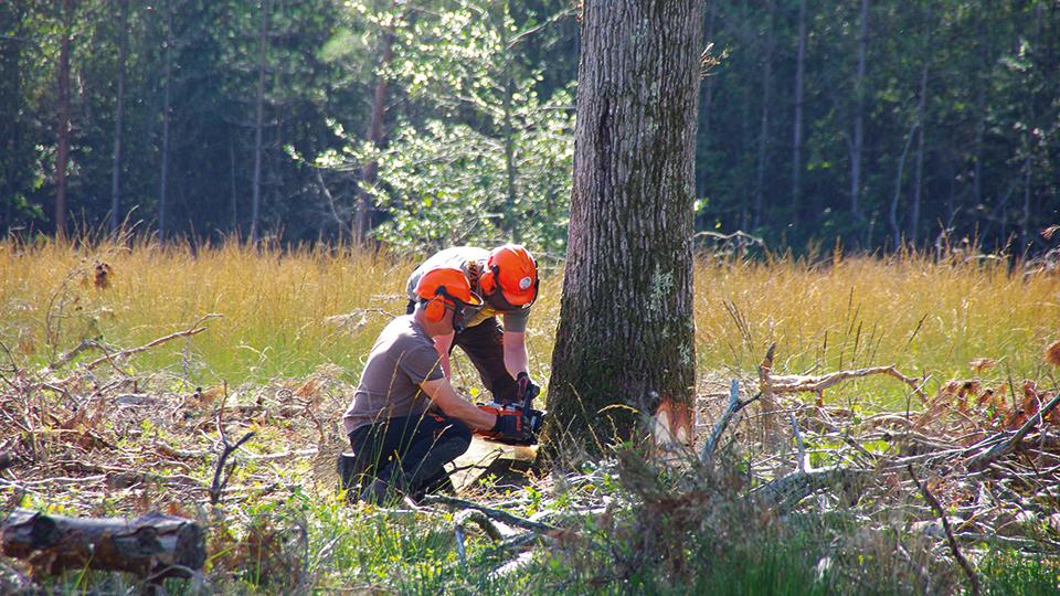Aide aux missions de maîtrise d'œuvre, expert forestier agréé